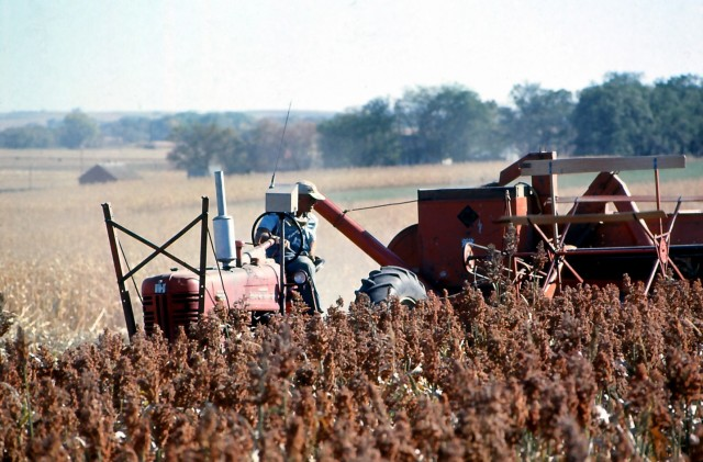 harvesting sorghum 2 oct 71 big