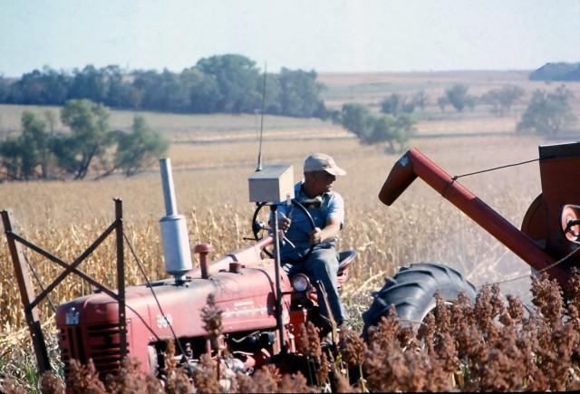 harvesting sorghum 3 oct 71