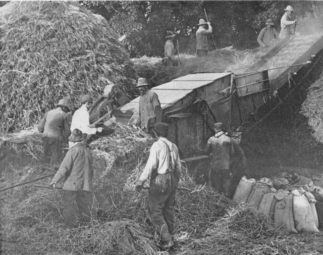 Diamond Jubilee threshing_0001