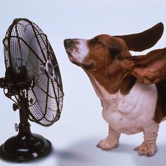 basset_hound_cooling_off-1