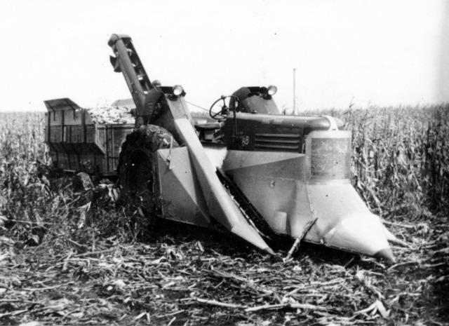 56-13 Picking corn James Svec 1954